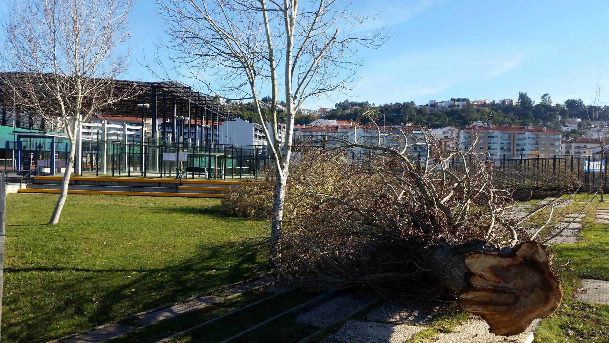 Proprietário abate 20 árvores e ameaça derrubar complexo de ténis em Leiria