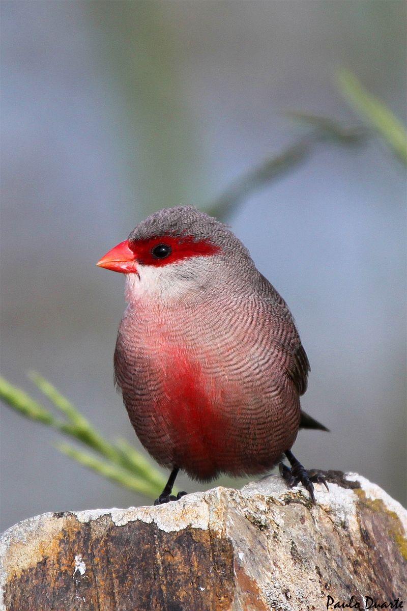 Quantas aves diferentes consegue observar na cidade de Leiria?