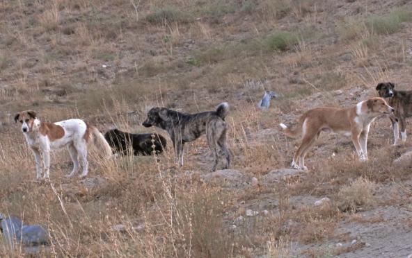 Alemanha pode ajudar a resolver problema de cães abandonados