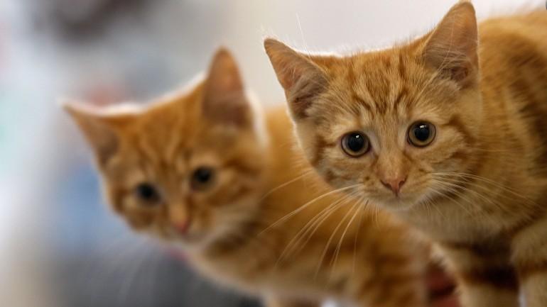 Aprovada lei que reconhece animais como seres sensíveis