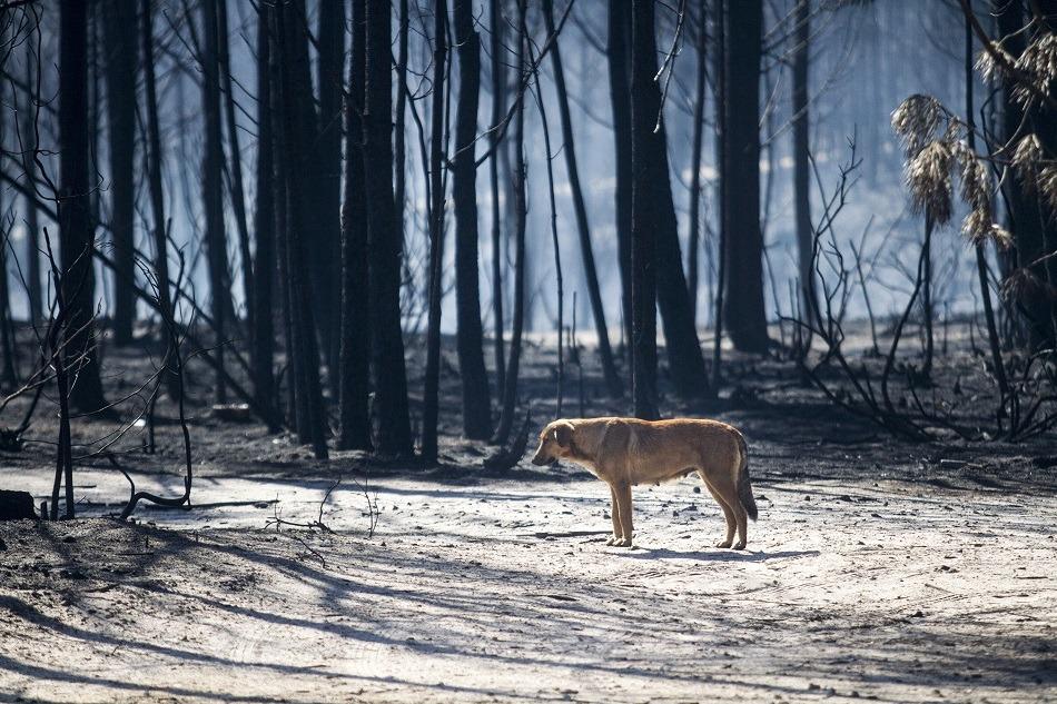 Animais que sobrevivem ao fogo começam a procurar comida