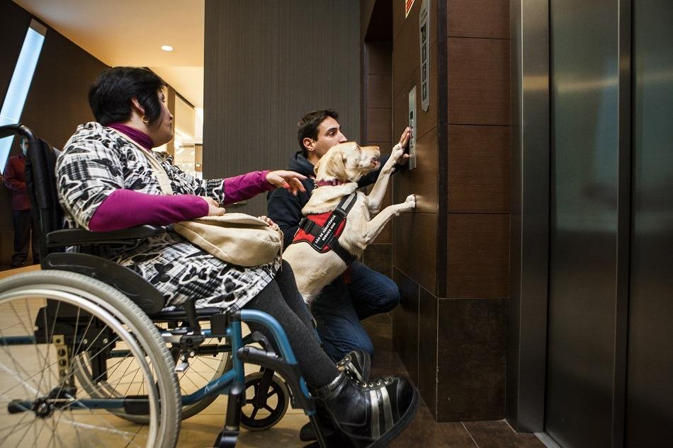 Cães de assistência esperam por apoios do Estado