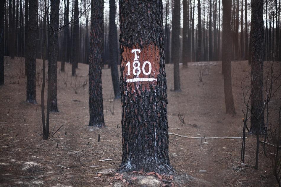 Cinco clubes rotários plantam 50 mil árvores no Pinhal de Leiria