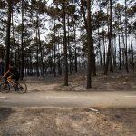 Incêndio no Pinhal de Leiria terá sido planeado um mês antes entre madeireiros