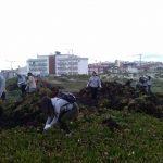 Voluntários retiram 39 toneladas de chorão-da-praia na Praia do Pedrógão