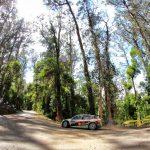 Rallye Vidreiro: Pinhal de Leiria abre estradas da mata para receber prova de eleição