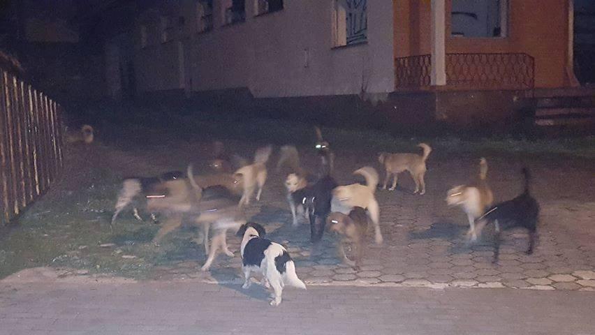 Autoridades investigam morte  de oito cães no Soutocico