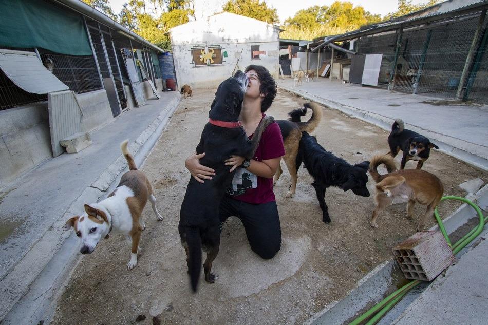 Associação Zoófila de Leiria procura ajuda para cuidar de animais seniores