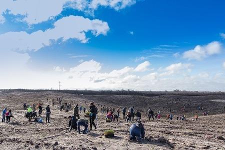 Embaixada dos Estados Unidos promove plantação de 10 mil árvores no Pinhal de Leiria