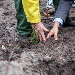 Voluntários regressam ao Pinhal de Leiria para plantar mais 5 mil árvores