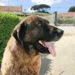 """Serra, o cão que guarda o """"cluster"""" artístico da Reixida"""