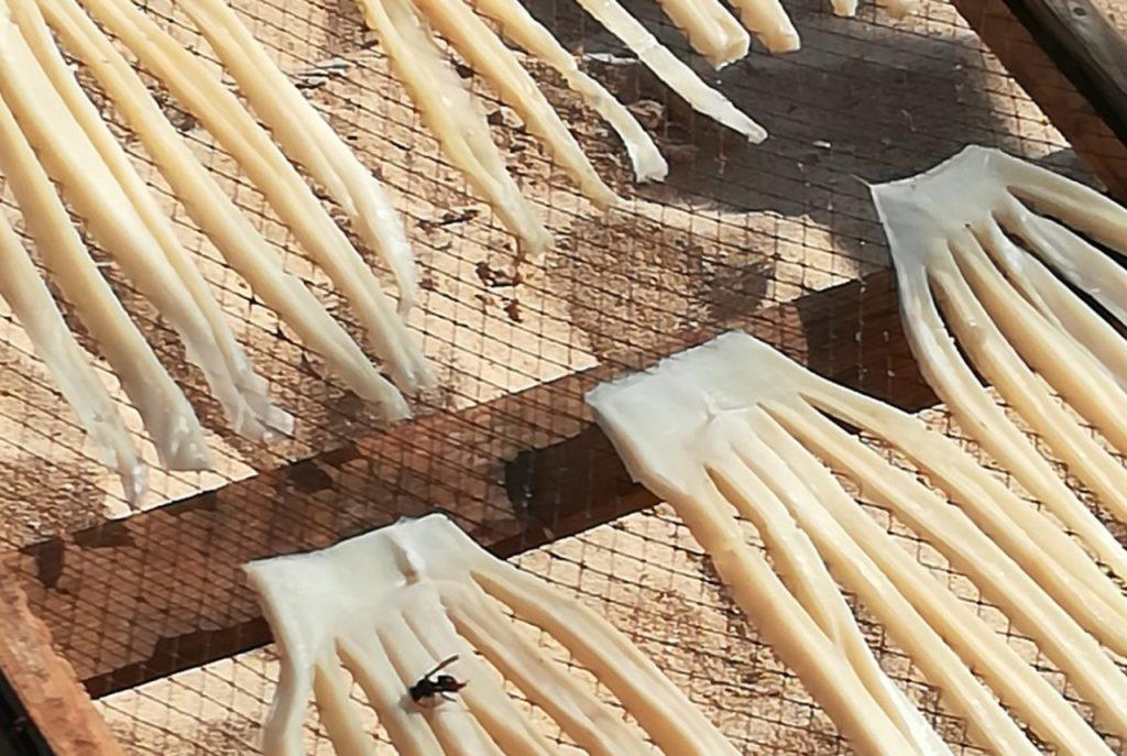 vespa asiática nos estendais de peixe seco da Nazaré